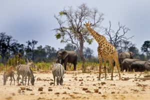 Lessons We Humans Can Learn From Animals